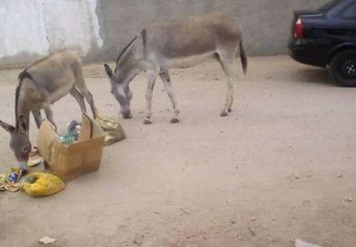 Prefeitura de Ipirá regulamenta a apreensão de animais soltos nas vias públicas